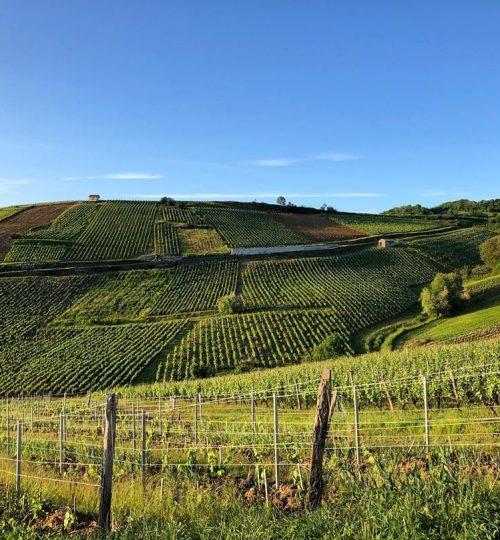 côte-du-Jura-vigne-Pupillin
